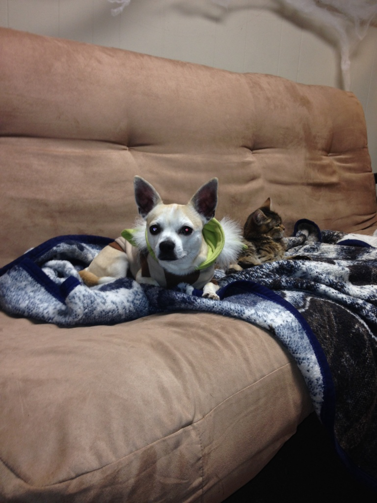 Nugget the Chihuahua and Sir. Arnold the Cat