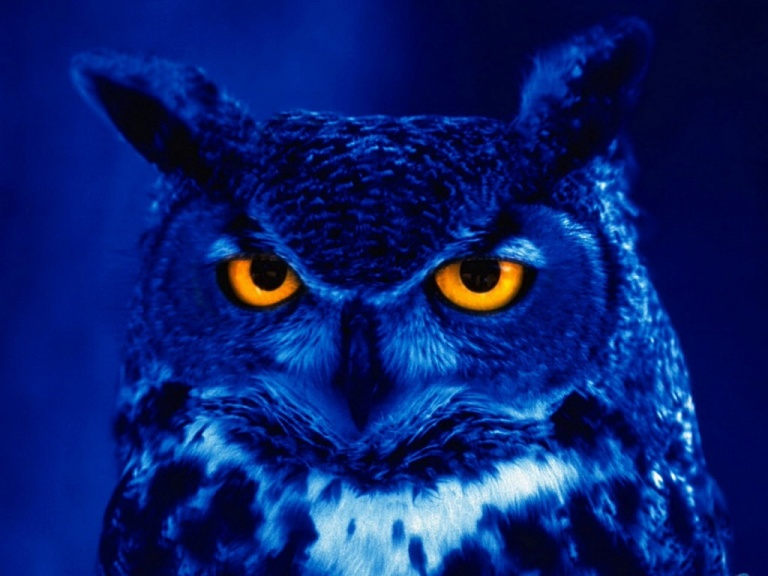 Night Owl Awake