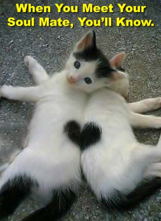 Cats with the Same Hearts