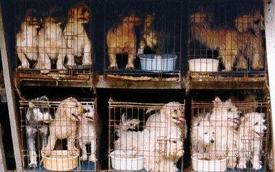 Stop Puppy Mills by Adopting!