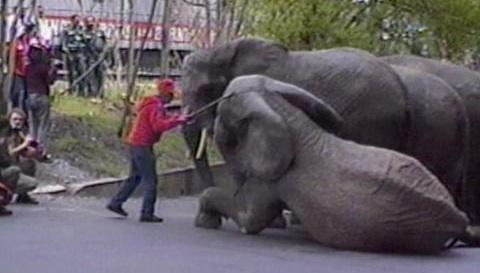 Boycott Circuses Abusive Evidence
